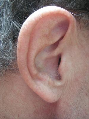 Bitten werden mit dem rechten Ohr besser verarbeitet - Foto: pixelio.de